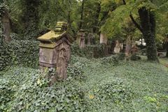 Old graveyard. Old graves overgrown with ivy royalty free stock photo