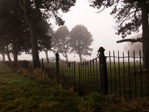 Old graveyard in the fog, England Stock Photo