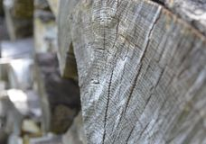 Old gray chopped log showing growth rings Royalty Free Stock Photo
