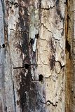 Old gray cracked burned tree trunk background texture, vertical close up. Detail stock image