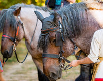Old gray horse. The old gray horse is in the park royalty free stock photo