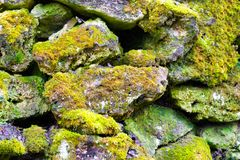 Old gray stone with green moss texture background Stock Photos