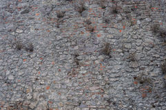 Old gray stone wall background Stock Images