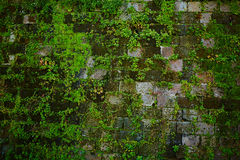Old gray stone wall with green moss texture Stock Photos