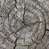 Old gray tree stump in Germany Stock Photo