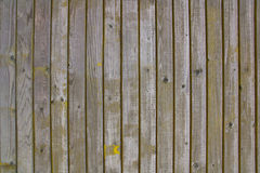 Old gray wood  wall green Stock Images
