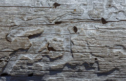 Old gray wood, wooden texture, background Royalty Free Stock Image
