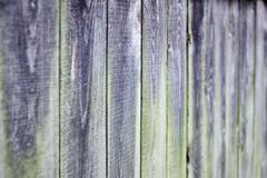 Old gray wooden boards, greenish moss stock image