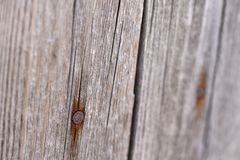 Old gray wooden surface background with rusty nails Stock Photography