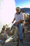 Old Greek riding mule in Santorini Royalty Free Stock Images