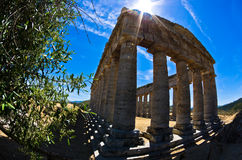 Old greek temple and olive tree at Segesta, Sicily Stock Photography