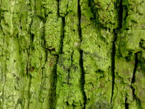 Old green bark. With moss stock photos