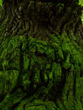 Old green bark Royalty Free Stock Image