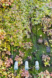 Old green ecological wall background Royalty Free Stock Photo