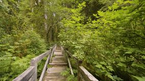 Old green forest covered with moss, with a wooden bridge across the lake, 4k, part4. Walk through the old green forest covered with moss, with broken trees stock video