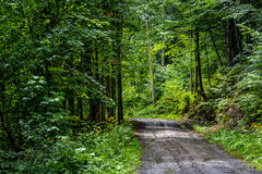 Old through the green forest. Old cracked asphalt road going through the green forest Royalty Free Stock Photography