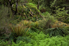 Forest with ferns and lichens Royalty Free Stock Photography