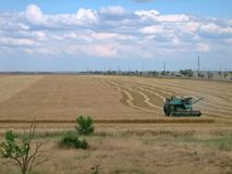 Old green harvester removes grain from the field during harvest. stock photos