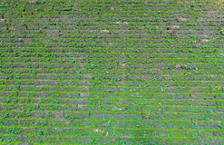 Old green mossy wall  Stock Image