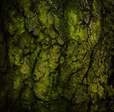 Old rough wood texture. Old green rough wood texture Royalty Free Stock Image