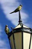 Parrots in buenos aires. Old green street lamp parrot and clouds in buenos aires argentina stock photography