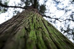 Old green tree, wood background royalty free stock photo