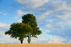 Old green trees in the middle of a field Stock Images
