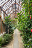 Old greenhouse in the botanical garden in Cambridge UK Stock Image
