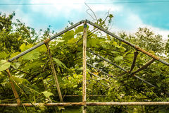 The old greenhouse Royalty Free Stock Images