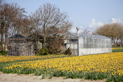 Old greenhouse on flower fields Royalty Free Stock Photo