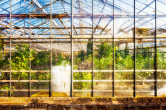 Old greenhouse Royalty Free Stock Photos