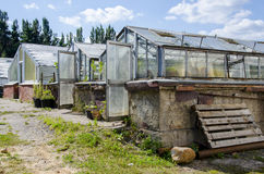 Old greenhouse. The old greenhouses and the plants near Royalty Free Stock Photos