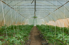 Old greenhouse Stock Photography