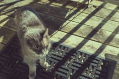 Old grey cat bathing in sun on porch. Old grey cat standing on a doormat Royalty Free Stock Photography