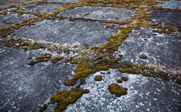 Old grey concrete pavement overgrown with moss.  Royalty Free Stock Photography