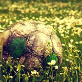 Old grey football ball hidden in the high grass flower and weed filed Royalty Free Stock Image