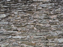 Old grey slate wall. Partially covered with moss Royalty Free Stock Photos
