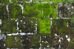 Old stone wall with moss and lichen. Old grey stone wall with moss and lichen texture background close up stock photography
