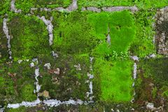 Old stone wall with moss and lichen. Old grey stone wall with moss and lichen texture background close up royalty free stock photography