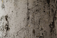 Old grey wall textured background. Vintage texture Stock Photography