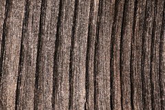 Old Grey Wood Plank Detailed Texture Stock Photo