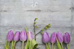 Old grey wooden background with purple white tulips,snowdrop and crocus border in a row and empty copy space, spring summer decora Stock Photography