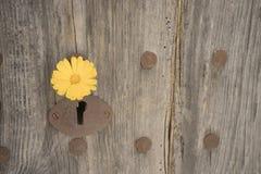 Old grey wooden door Royalty Free Stock Photo