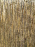 Old grey wooden surface of the table, floor. Old grey wooden texture, vertical stock image
