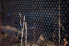 Old grid steel iron metallic rusty fence. Industrial Stock Images