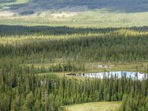 Old growth forest landscape with lakes and bogs stock photos