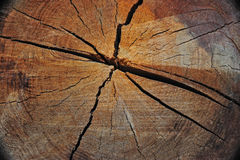 Old growth log Stock Photography