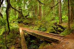 Old-growth lush forest and small wooden bridge. Mount Rainier National Park Stock Photos