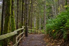 Old growth rain forest in Holland Creek trail in Ladysmith, Vanc Stock Images