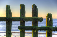 Old groynes on beach at sunrise Royalty Free Stock Photo